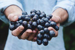 Investir vin Groupement Foncier Viticole