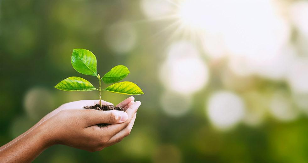 Investissement : une liste de fonds verts performants pour être plus responsable !